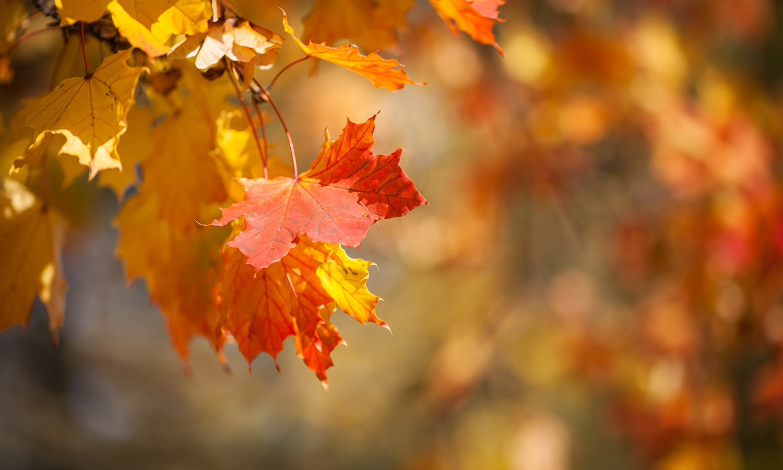 fall tune ups